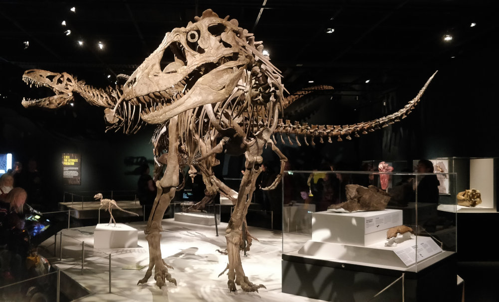 Tiranosaurios varios