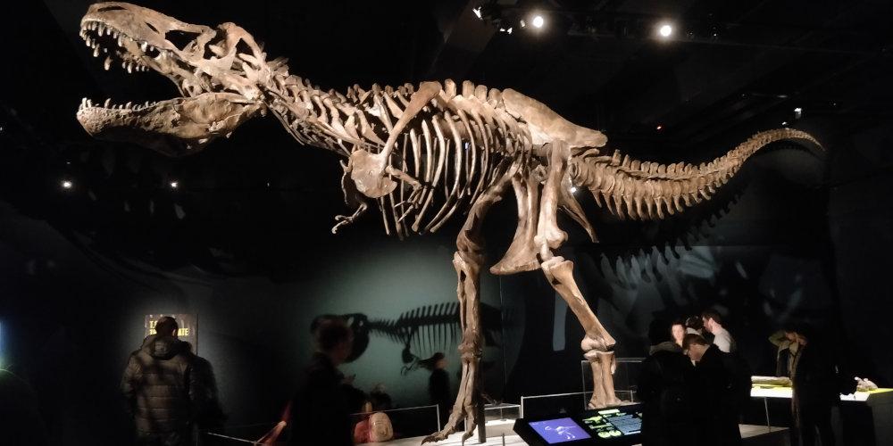 Modelo de Scotty el Tiranosaurio